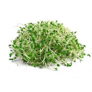 VOJTĚŠKA (ALFALFA) - semínka na klíčení 20g