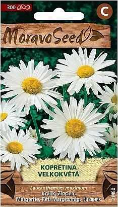 Kopretina velkokvětá, bílá 31480