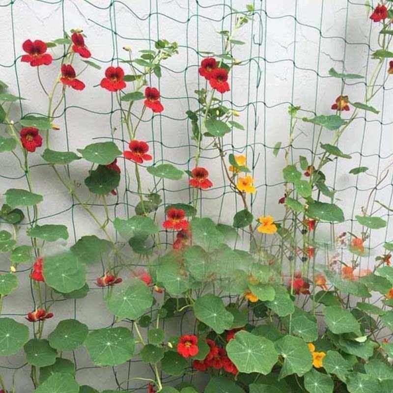 Podpůrná síť pro pěstování zeleniny a květin