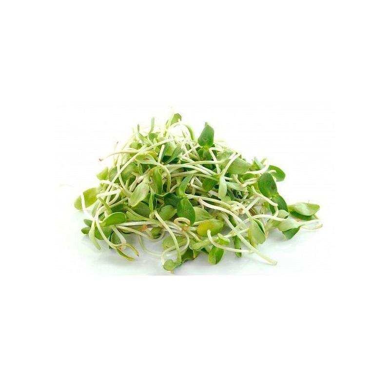 SLUNEČNICE - semínka na klíčení 20g