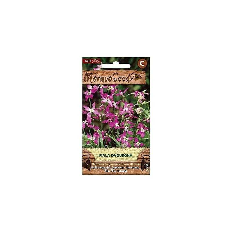 Fiala dvourohá, fialová 02530