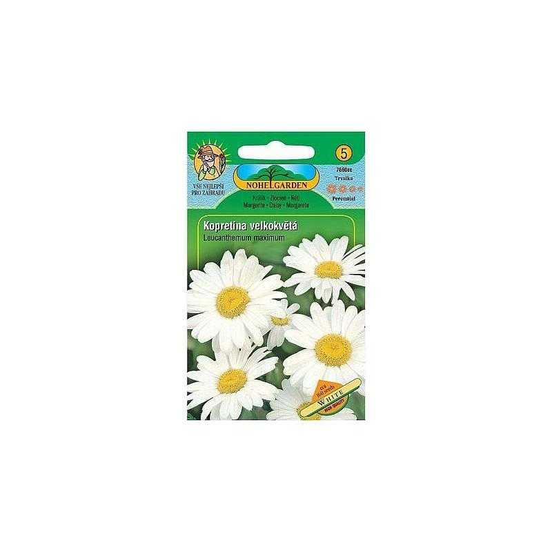 Kopretina velkokvětá, bílá, 160 semen