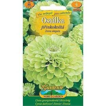 Ostálka lepá jiřinkokvětá, zelená, 50 semen