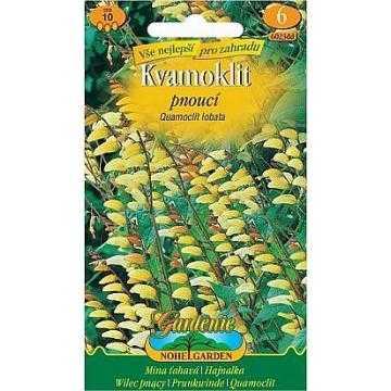 Kvamoklit - Mina laločnatá, červeno-žlutá, 10 semen