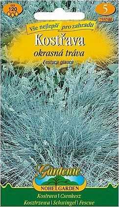 Kostřava - okrasná tráva, modrá, 120 semen