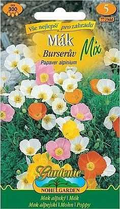 Mák Burserův, směs, 300 semen