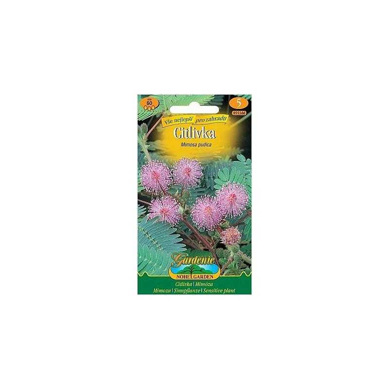 Citlivka stydlivá, růžová, 60 semen
