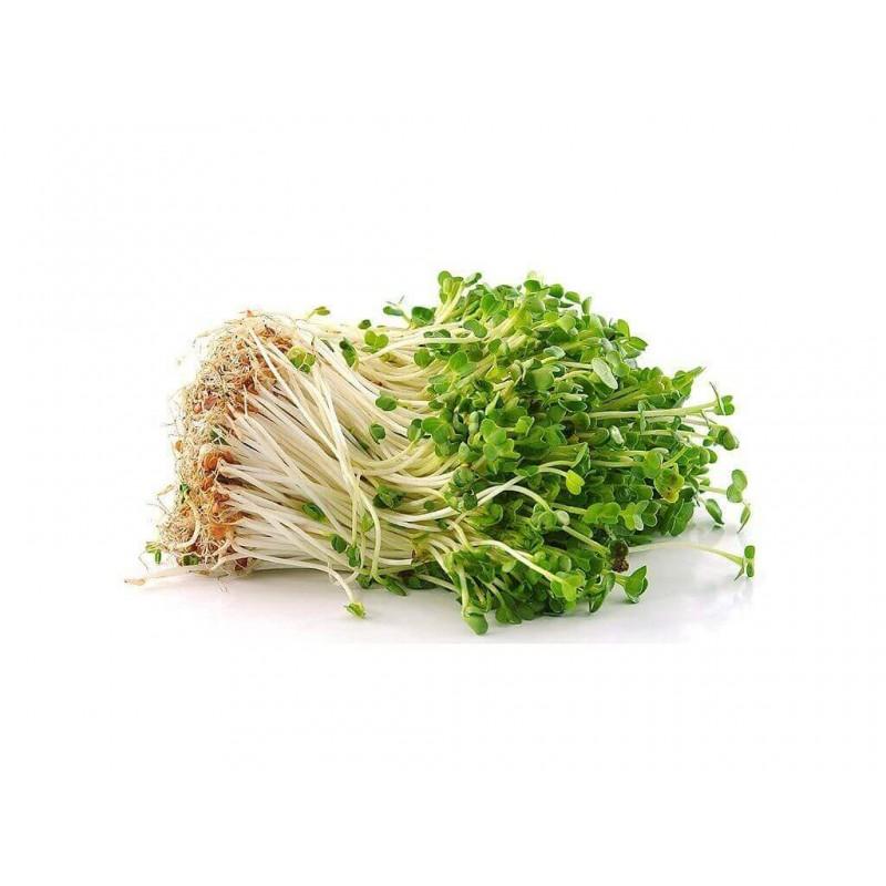 ŘEŘICHA - semínka na klíčení 30g