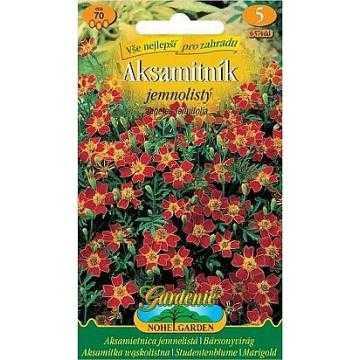 Aksamitník jemnolistý, červený, 70 semen