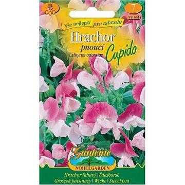 Hrachor vonný pnoucí CUPIDO, růžovo-bílý, 15 semen