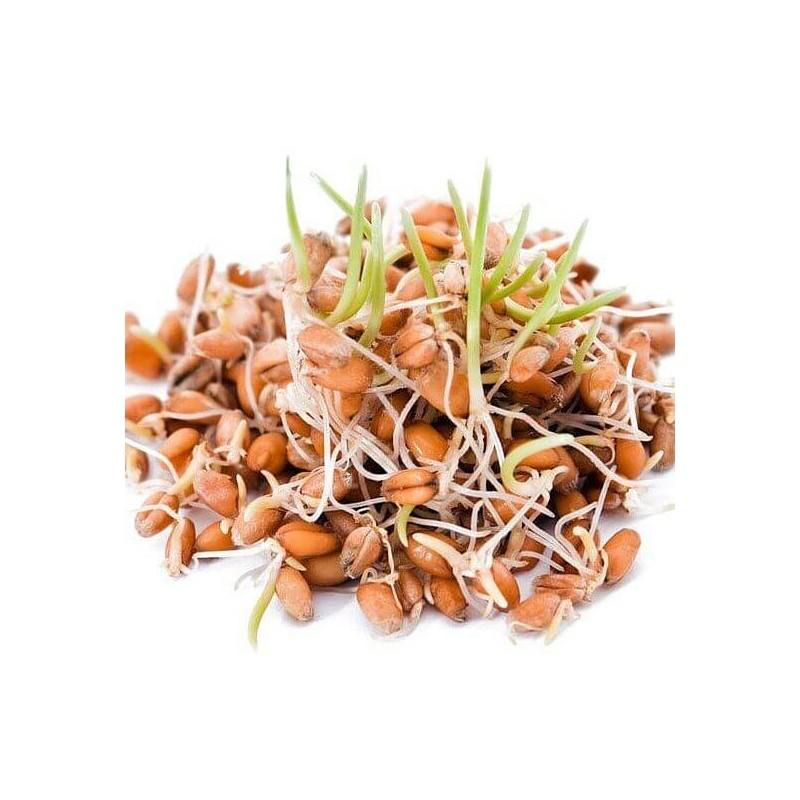 PÍSKAVICE - semínka na klíčení 20g