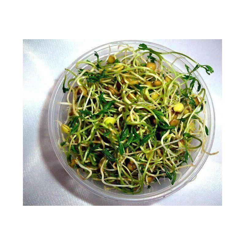 RUKOLA - semínka na klíčení 10g