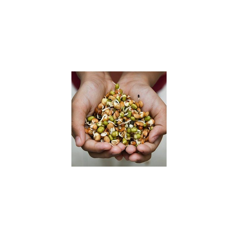 PIKANTNÍ SMĚS - semínka na klíčení 20g