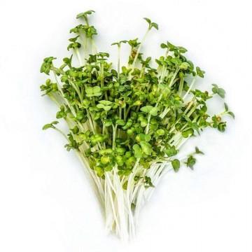 HOŘČICE BÍLÁ - semínka na klíčení 30g