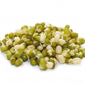 FAZOLE MUNGO - semínka na klíčení 50g