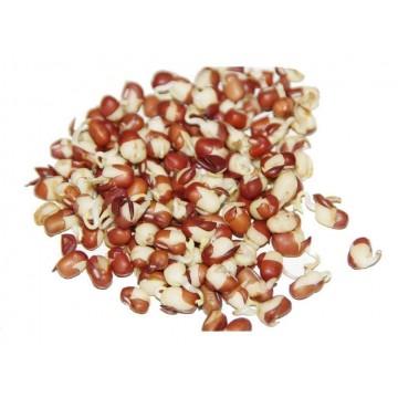 FAZOLE ADZUKI - semínka na klíčení 50g