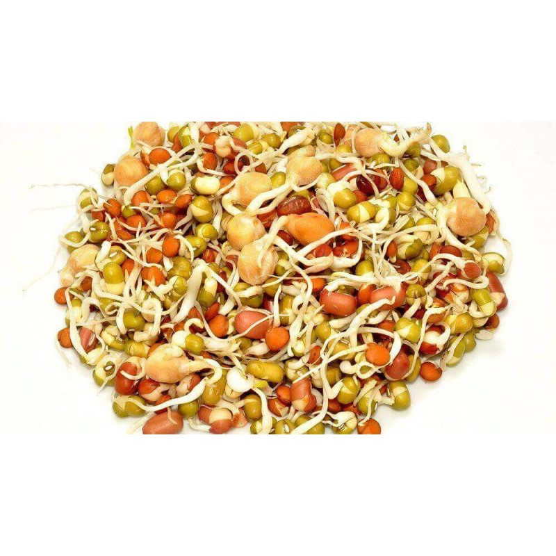 ČOČKA - semínka na klíčení 20g