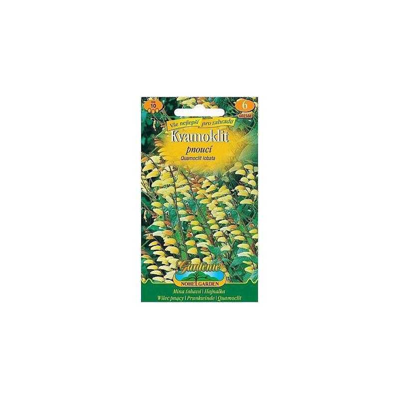 Kvamoklit - Mina laločnatá, červeno-žlutá