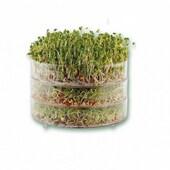 Miska na klíčení (biomiska)  Miska na klíčení má 3 patra, takže můžete klíčit tři různé semínka najednou. Nepotřebujete žádnou zem, žádná hnojiva pro růst semínek. Stačí je jenom 2x denně zalévat a za pár dnů můžeme sklízet klíčky plné vitamínů, minerálů. Klíčit můžete jakákoliv semínka, za nás doporučujeme semínka fazole mungo, semena vojtěšky a nebo známe klíčky mladého ječmenu. Jak se biomiska používá ?. Do misky nasypte semínka a zalijte vodou ( tvz: nechte semena vykoupat ve vodě ) Přebytečná voda v misce vyteče do spodní misky, kterou je potřeba každý den vylévat Tento proces zalévání semínek 2x za den - Zaléváme ráno a večer Misku během klíčení dáme na tmavé místo až semena vyklíčí, můžete je dát například za okno, na chodbu. Semena můžete po vyklíčení jíst, doporučujeme nechat vyklíčit 2-7 dní, dle semen Rozměry: Průměr 20 cm Výška 16 cm  #vyklictcz #klicky #microgreen #microgreens #domacifarma #farma #vyklicenocz #kliceni #pestovani #gastro #vegan #flowers #cervenezeli #zeli #cocka #seminka #seminkacocky #veganfood #zakladni #zakladnismes #jemnasmes #jemna #nepikantni #sklizeno #redkvicka #redpurple #bylinky #microbylinky #miska #miskanakliceni