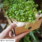 #Repost @karlinmarket with @get_repost ・・・ 🌱 @herbafabrica, pražská farma, která hydroponicky pěstuje mikrobylinky. Nově vytvořili HerbaBox, díky kterému si každý může doma mikrobylinky vypěstovat sám. . . . #karlinmarket #karlin #mikrobylinky #herbabox #bylinky #vyklicenocz #microgreens #vyklicitcz #vegan #veganfood #grassfood #bylinky